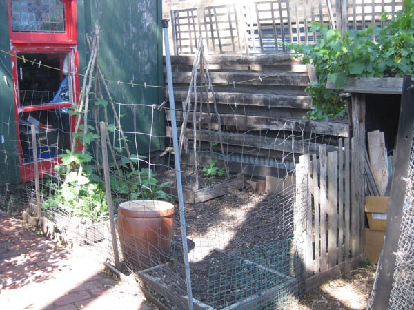 Our House - J's garden and chooks-2