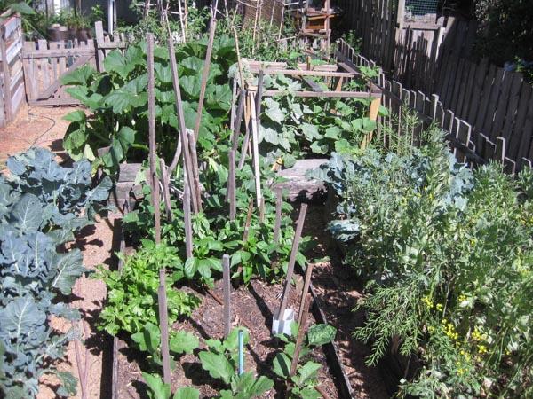 Our House - vegie garden-1