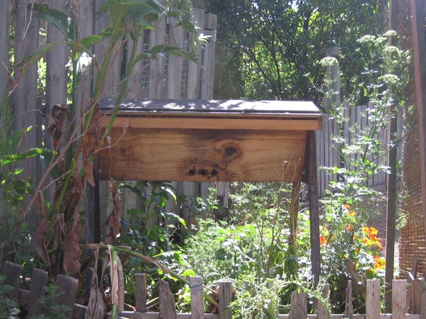 Our House - food forest-3