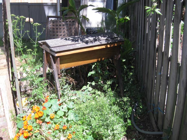 Our House - food forest-2